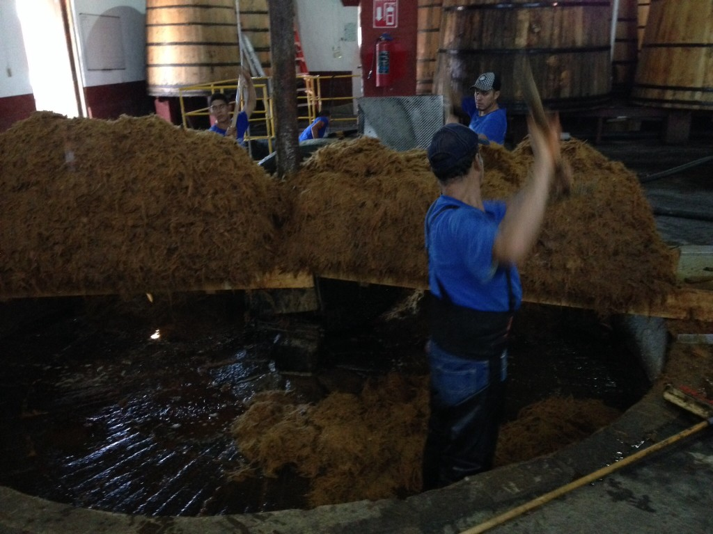 The workers at Forteleza  standing in the pit where they wash and crush the cooked agave plant fibers three separate times to extract as much juice as possible before fermenting.  The big stone wheel barely visible in the center background will crush the fibers by being driven round in a circle inside the pit
