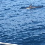 Dolphins playing with us on the way to San Blas